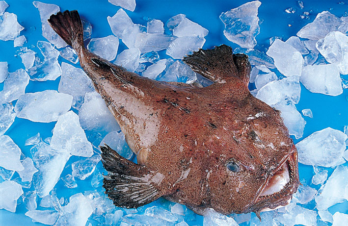 frozen monk fish whole