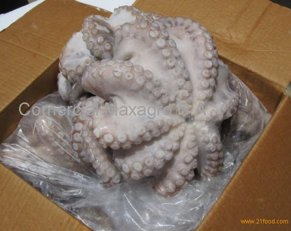 Octopus Vulgaris from North Africa (Muaritania and Morocco)