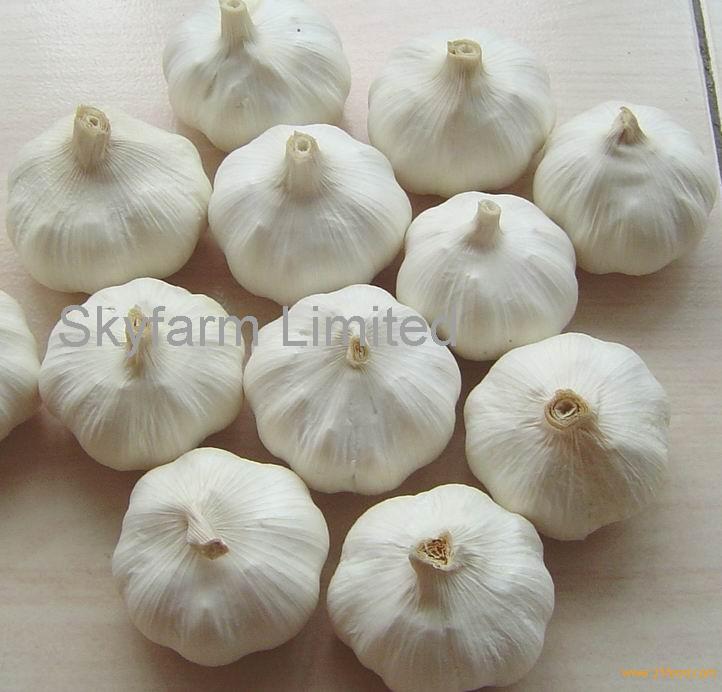 Fresh Organic White Garlic