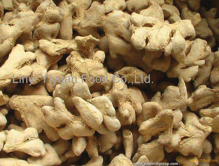 Top quality organic food dried ginger for ginger buyer