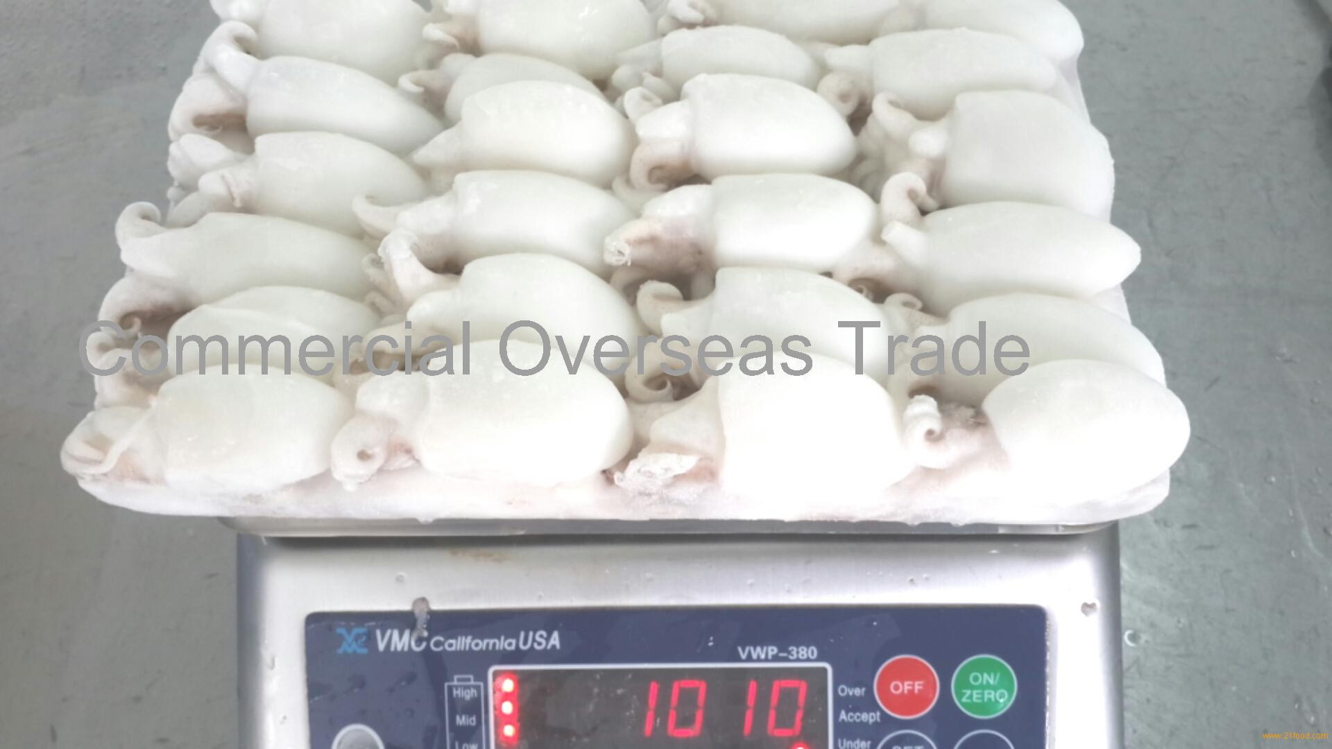 Frozen cuttlefish for sale. 30% discount