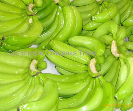 Cavendish Banana, Class A, Organic for export. 30% Discount