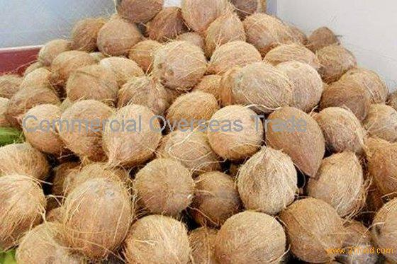 Semi Husked coconuts for sale. 30% discount