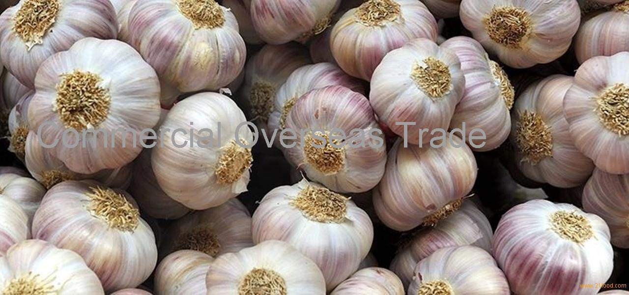 Fresh / Frozen / Dried Garlic for sale on 30% discount now