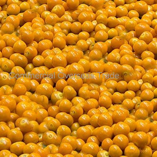 IQF Gooseberry on sale, 30% discount