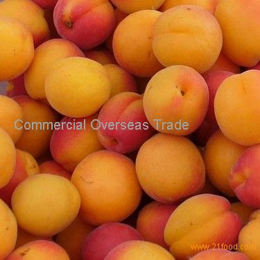 Organic Fresh Apricots now available. 30% Discount