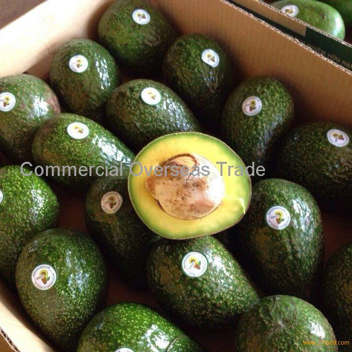 Quality Fresh Avocados now available on sale. 30% discount