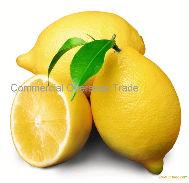 Fresh Lemon (Eureka / Adalia) now available on sale. 30% Discount
