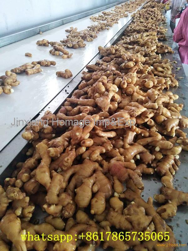 Fresh ginger 150g China export quality