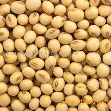 Soybeans for Sale