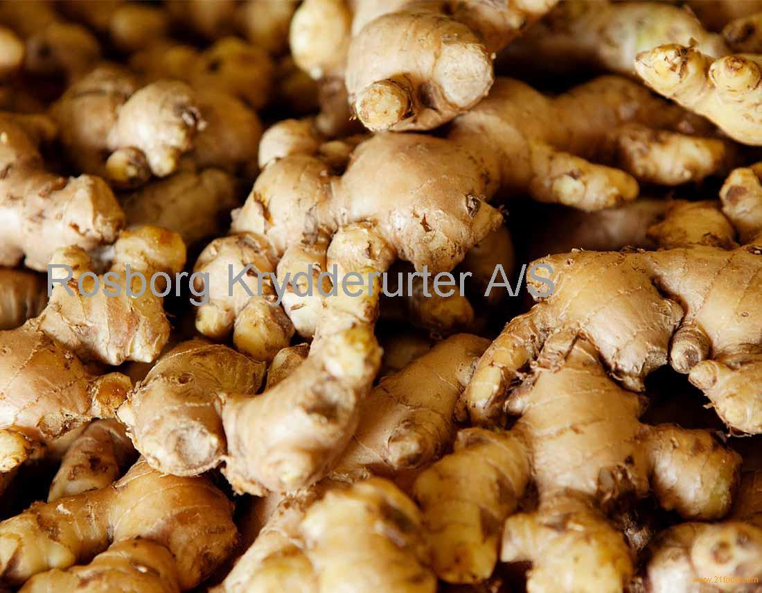 Best Quality Fresh Ginger