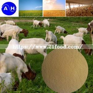 Amino Acid Powder (for Feed Grade)