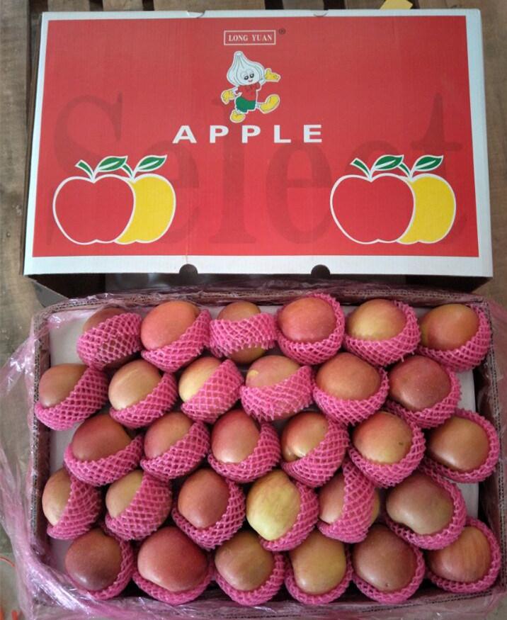 Fresh 138-198 Size Plastic Bagged Red FUJI Apple for Bangladesh
