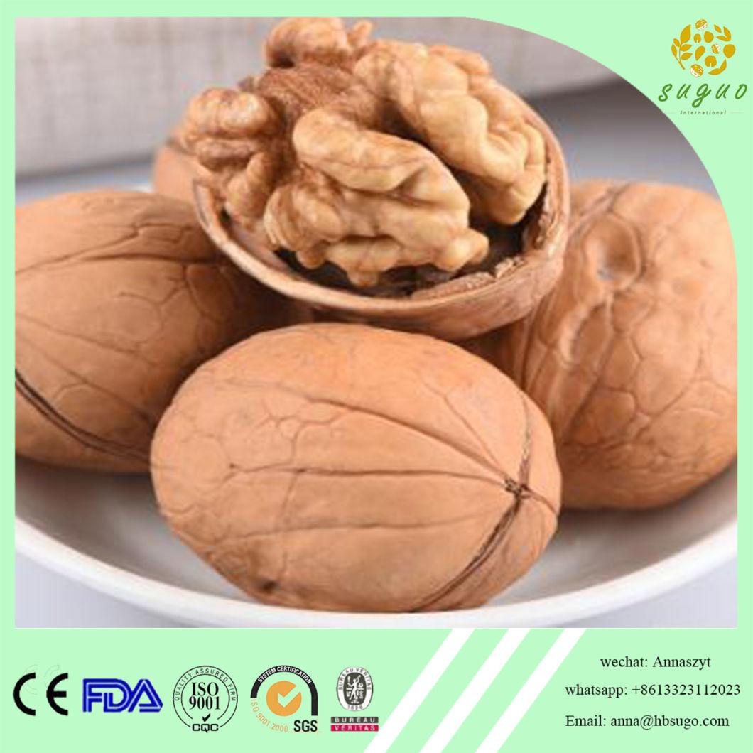 Walnut Supplier New Crop Walnut Walnut Wholesaler