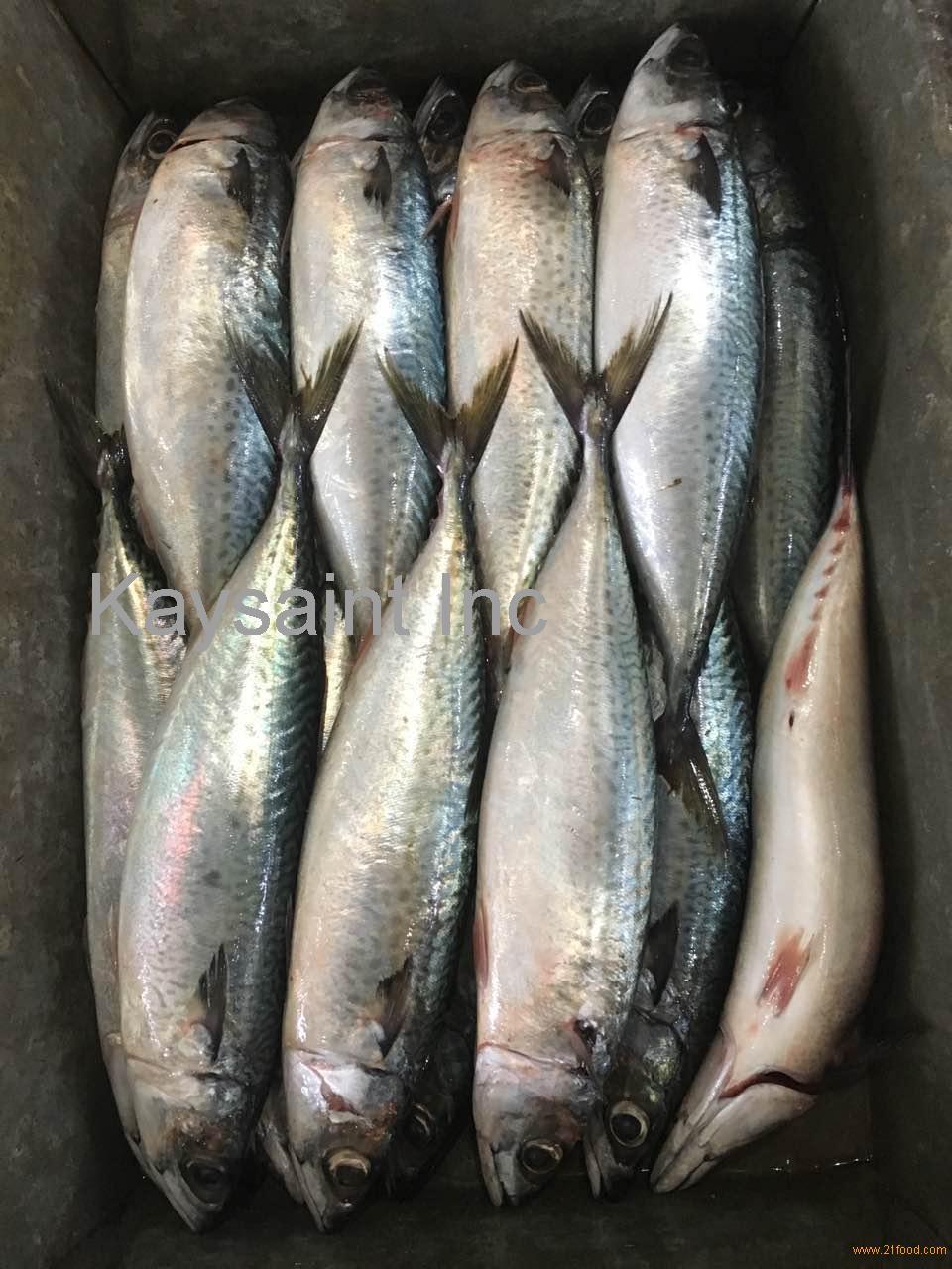 land frozen pacific mackerel wr 10kg 95%nw