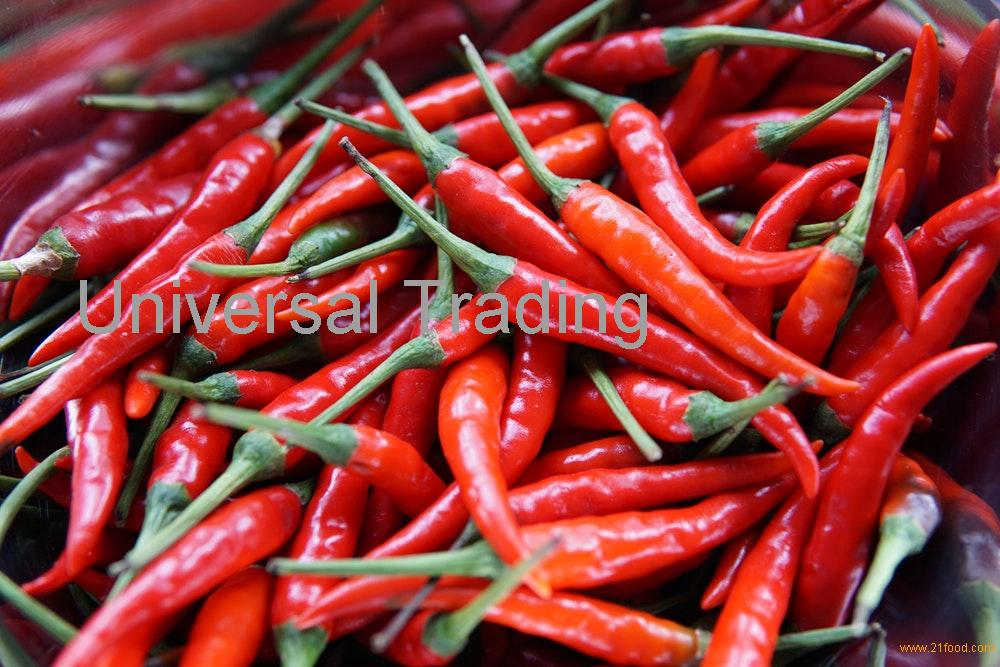 Red hot Chilli Pepper for sell.