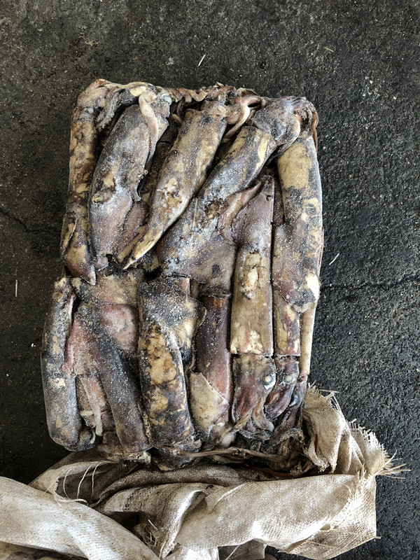 Frozen Indian squid all size