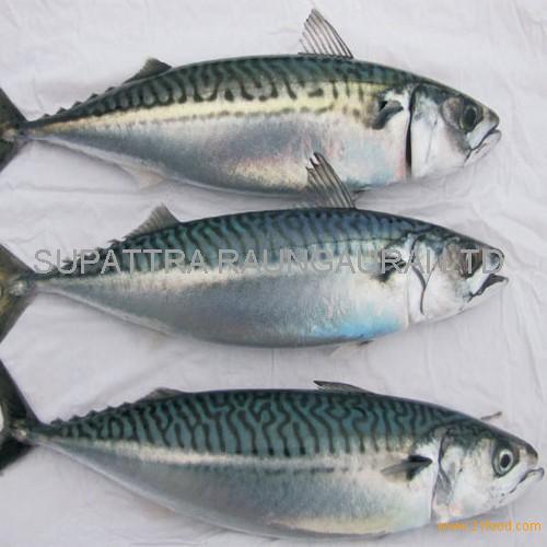 Frozen seafood importers of frozen pacific mackerel fish