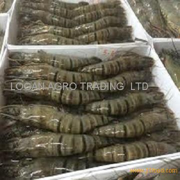 Fresh Frozen Whole Vannamei Shrimp White / Black Tiger Shrimp /prawn
