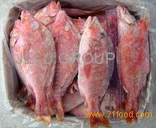 Frozen Horse Mackerel Fish Whole Sale