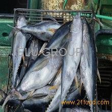 , WHITE FISH ,SNAPPER FISH, GROUPER FISH,MACKEREL FISH,ROCK FISH , YELLOWTAIL