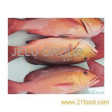 Frozen Quality Arctic char,carp fish, catfish,dory fish, Frozen grouper, Frozen halibut