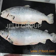 FROZEN SAFFRON COD FISH, SMELT FISH,FROZEN HERRING FISH,