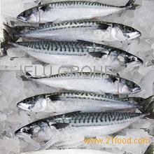 Frozen Grouper Fish Whole Round ,Frozen Mackerel fish, Frozen Tilapia fish and Sole fish for sale