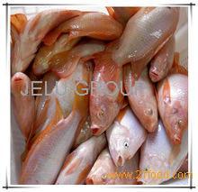 Pulpos ,Pargos,Meros,Otros. TILAPIA FISH, SALMON FISH ,SURIMI ,minced meat ,