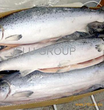 Atlantic mackerel,Black sea bass,European sea bass FOR Sale