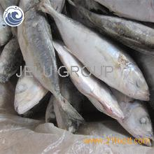 Frozen Basa fish,flounder fish,hake fish,scup fish,smelt fish for sale