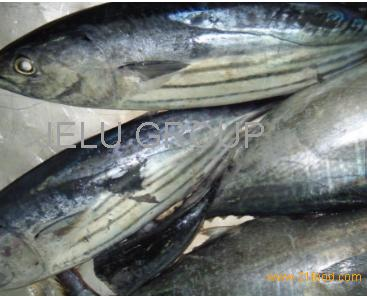 Sea food companies frozen horse mackerel fish product