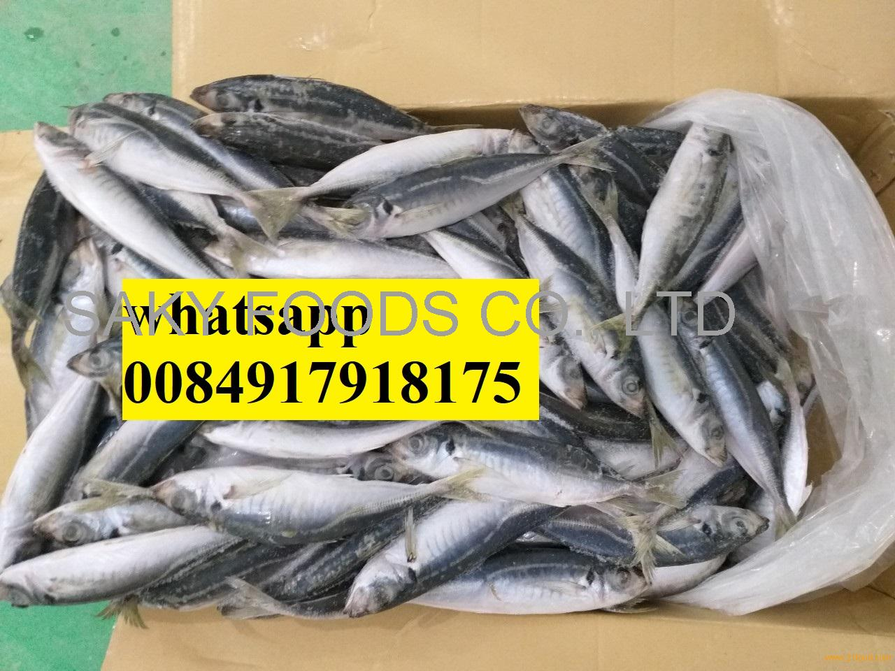 Vietnam Frozen Round Scad / Layang scad / Yellow tail scad/ hard tail scad with good price