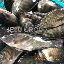 Frozen Fish Supplier Frozen Tilapia