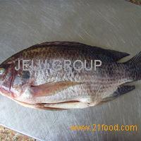Fresh Frozen Black Tilapia Fish Best Quality CHEAP PRICE