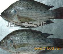 best selling products whole frozen tilapia and Seafood