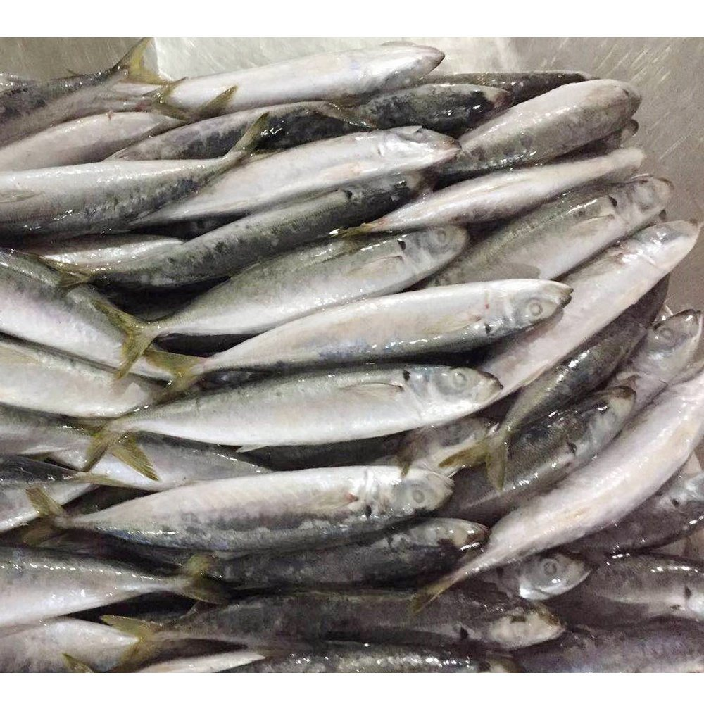 Horse Mackerel Fish Products Cheap Price Frozen Round Scad Fish