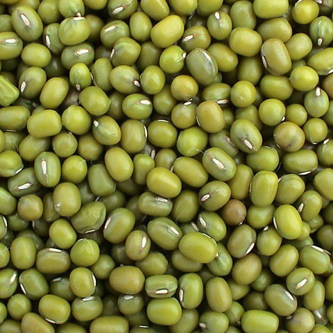 Green Mung Bean 2018 Crop Supply Different Size Mung Beans