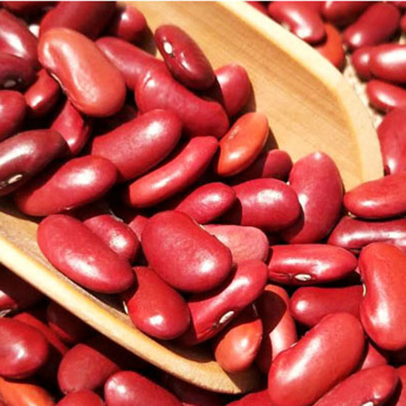 Latest Dried Bulk Red Kidney Beans Organic