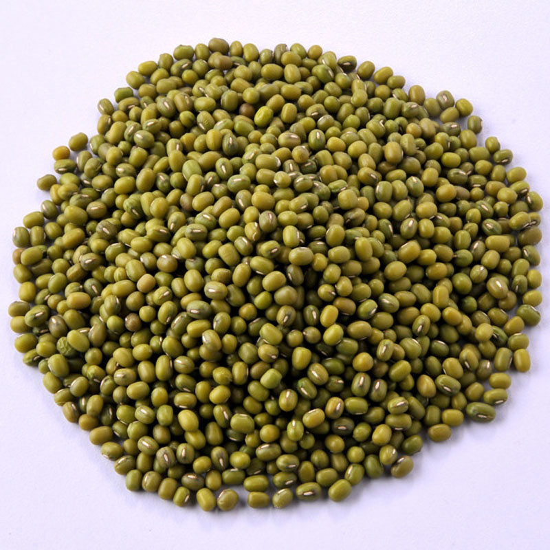 Quality Mung Beans at Good Prices