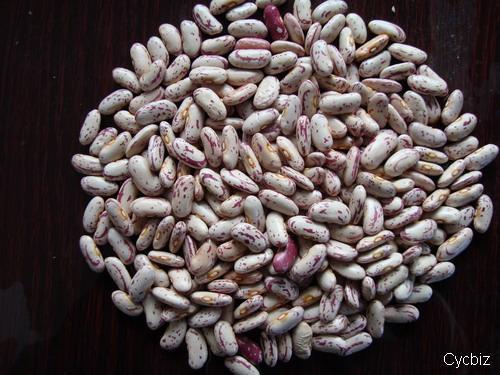 Export Good Quality Light Speckled Kidney Bean