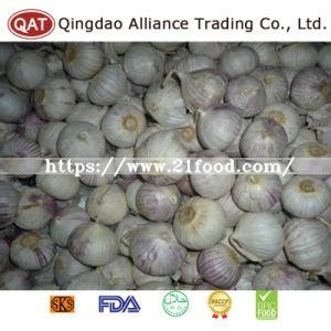 Fresh New Crop Chinese Solo Garlic