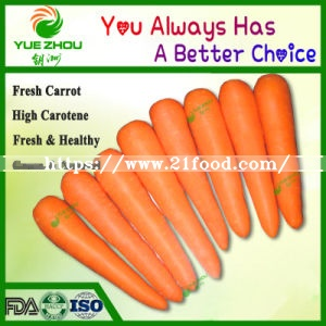 Supply Fresh Carrot S M L 2L with High Quality From China Factory