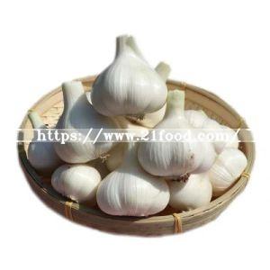 New Crop Natural Fresh Normal Pure White Garlic