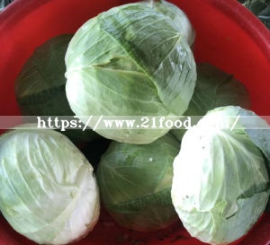 Fresh Green/White Cabbage