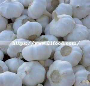 2017 New Crop Normal White Garlic