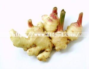 2016 New Crop Ginger
