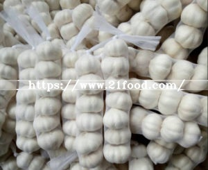 No 5 New Wholesale Shandong Good Price Export Solo Pure Peeled Fresh Dried Normal/Super White Dehydrated Garlic