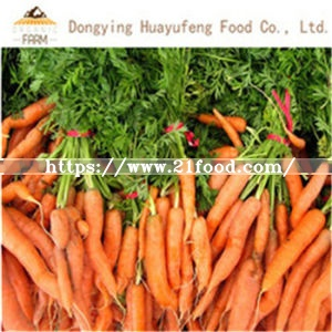 2019 New Crop Chinese Fresh Carrot with Competitive Price