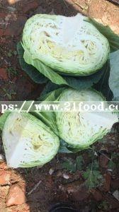 Chinese Mesh Bag Carton Fresh Long Green White Cabbage